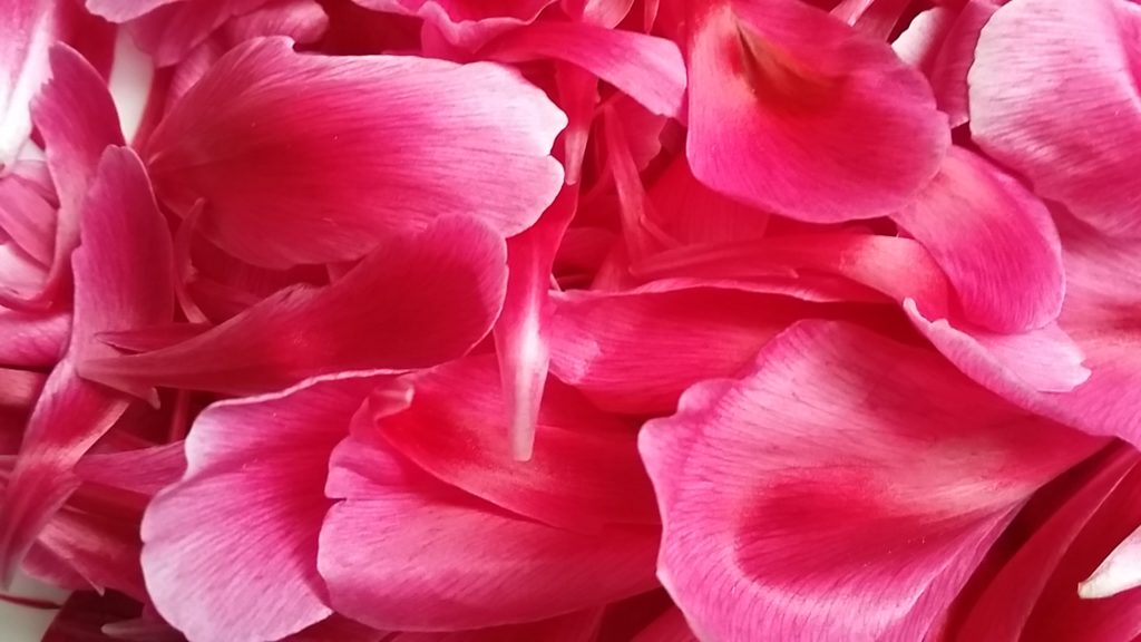 fleurs roses inspirantes